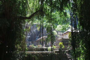 A yoga retreat building is visible through a thick jungle canopy. The wildlife and architecture are extremely stunning.